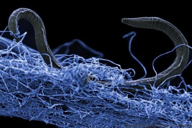 Nel cuore della Terra c'è una biosfera oscura: scoperti organismi assurdi
