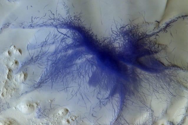 Una gigantesca tarantola blu su Marte: cosa si nasconde dietro a questo incredibile scatto